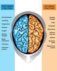 hemispheres-cerveau