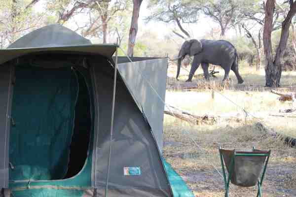 elephant in my camp