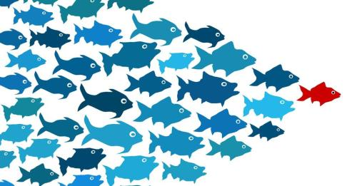leadership fish