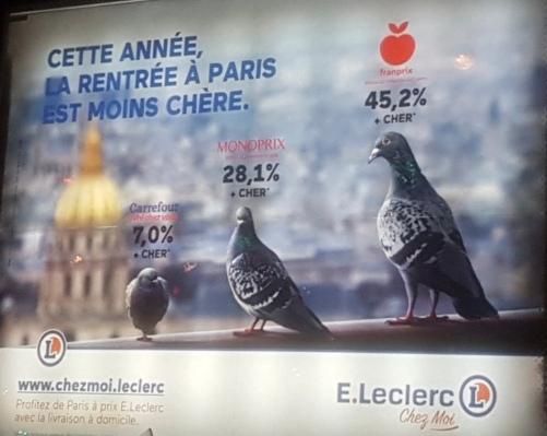 chezmoi et les pigeons.jpeg